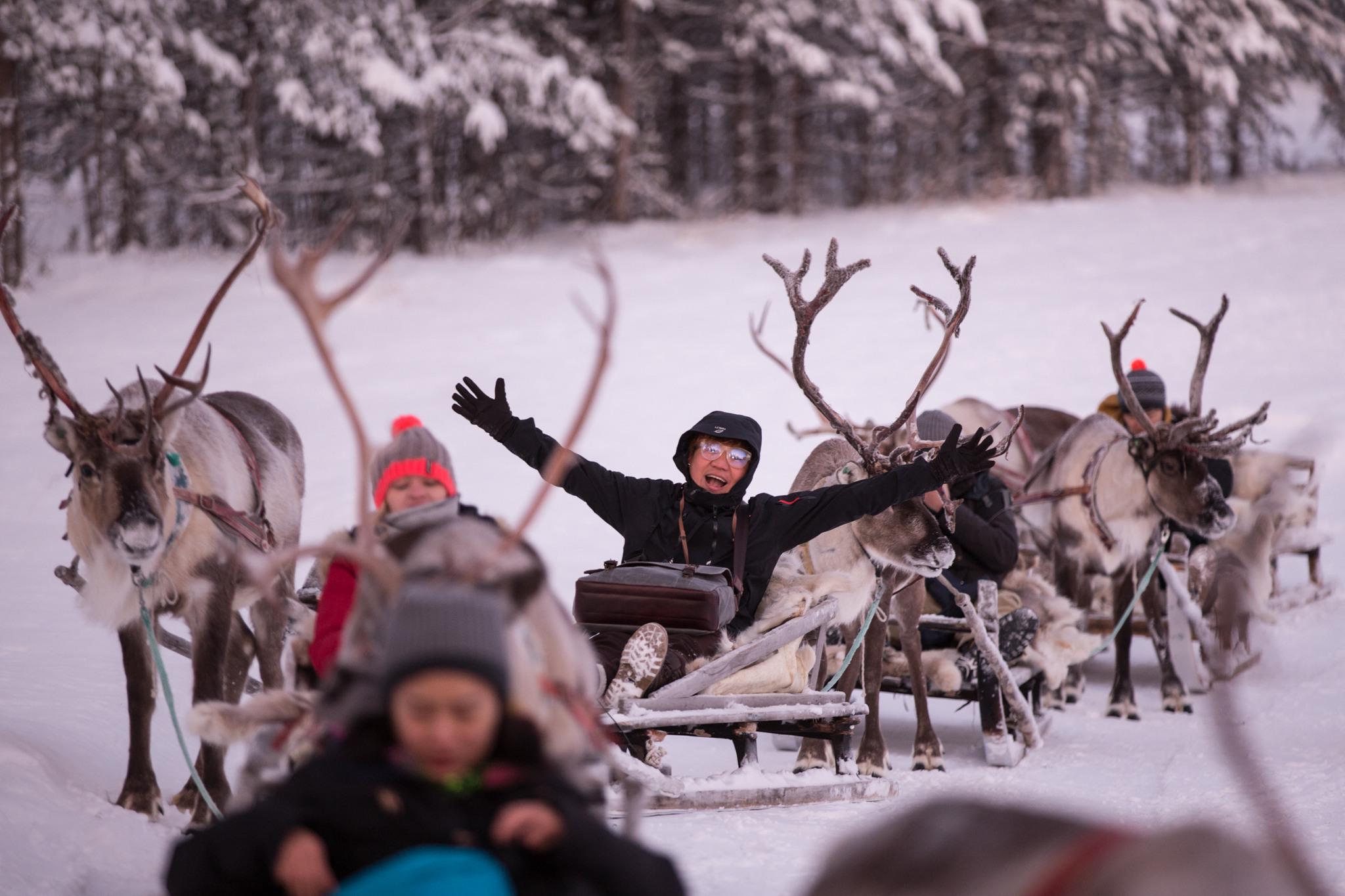 Porosafarilla Inarin Porofarmilla, kuvassa poroja ja turisteja. kuva: jouni männistö